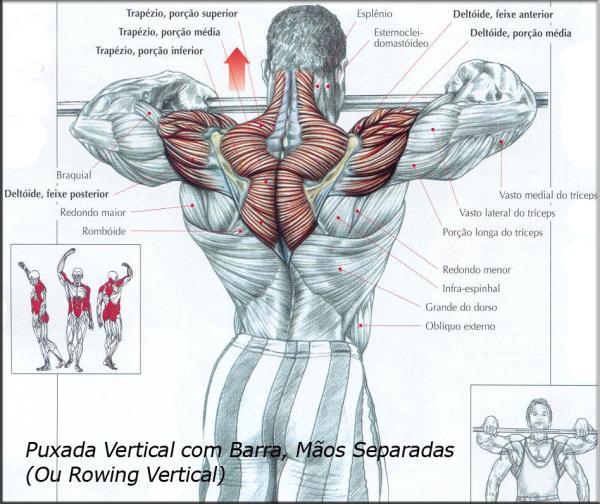 Favoritos Exercícios para Ombros e Trapézio   Brasil Fisiculturismo RC74